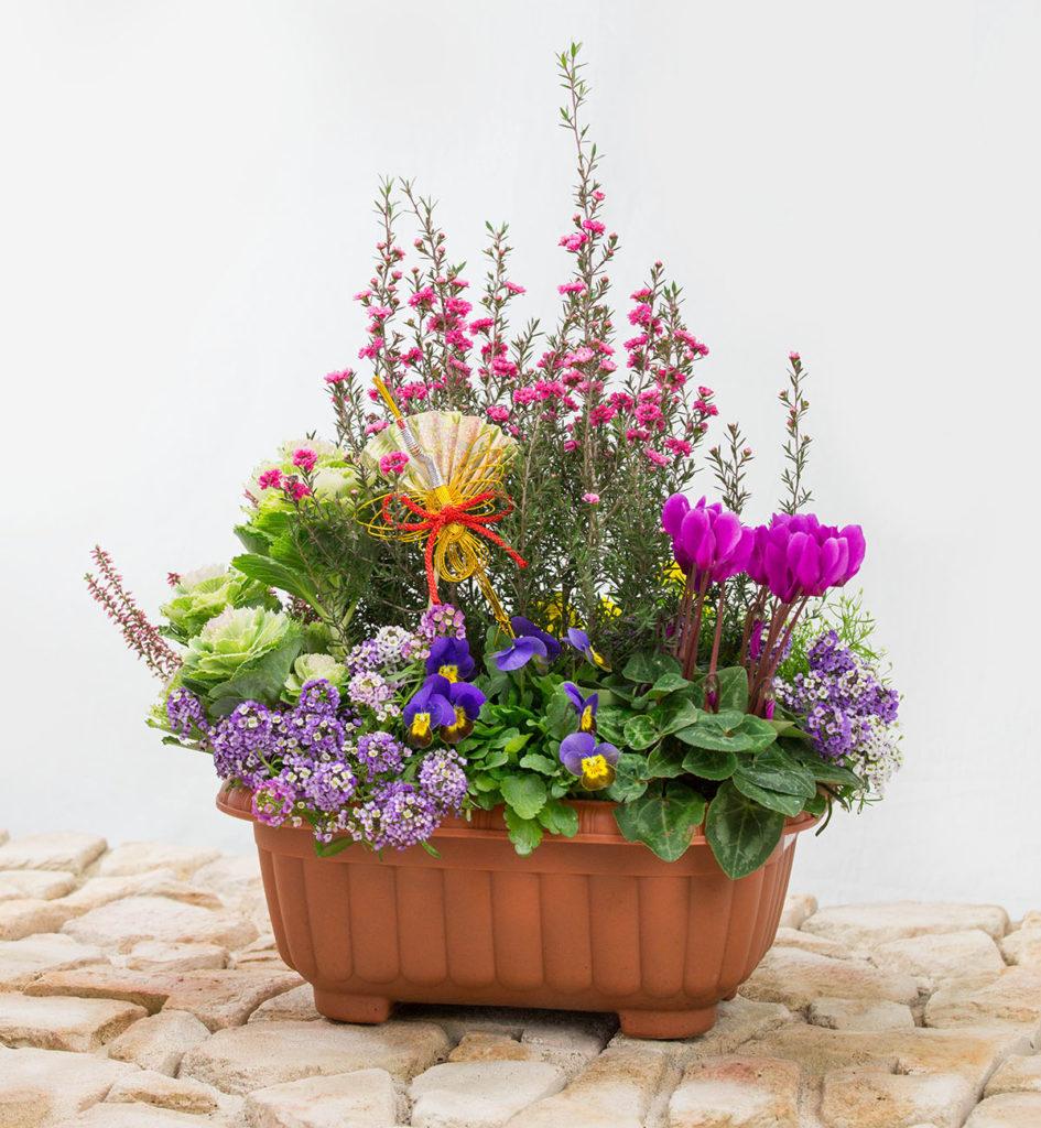 早くもお正月、花の寄せ植え。